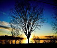 Sunrisetree